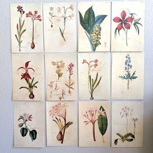 Vintage Set of 12 Botanical Floral Calendar Prints